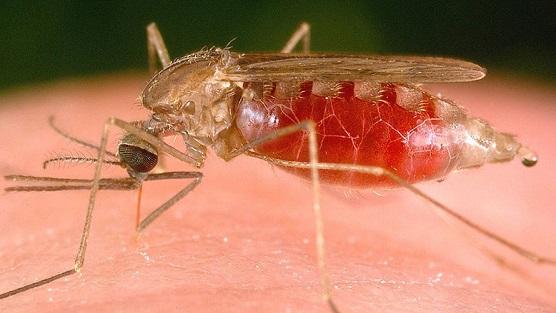 मलेरिया,Maleria,mosquito,मलेरिया के लक्षण,मलेरिया के लक्षण हिंदी,मलेरिया के लक्षण बताये,मलेरिया के लक्षण और बचाव,मलेरिया के लक्षण इन हिंदी,मलेरिया के लक्षण क्या है,malaria ke lakshan,malaria ke lakshan in hindi,malaria ke lakshan bataye
